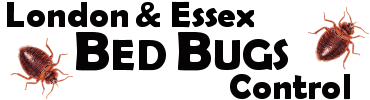 Professional pest control solutions for Bed Bugs in London